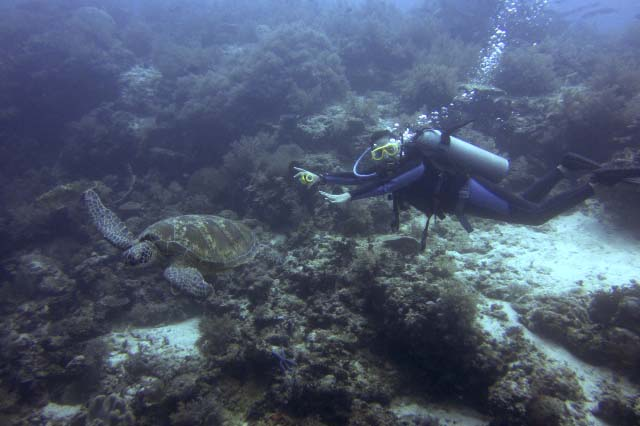 Scuba diving in Balicasag Island in Bohol, Philippines