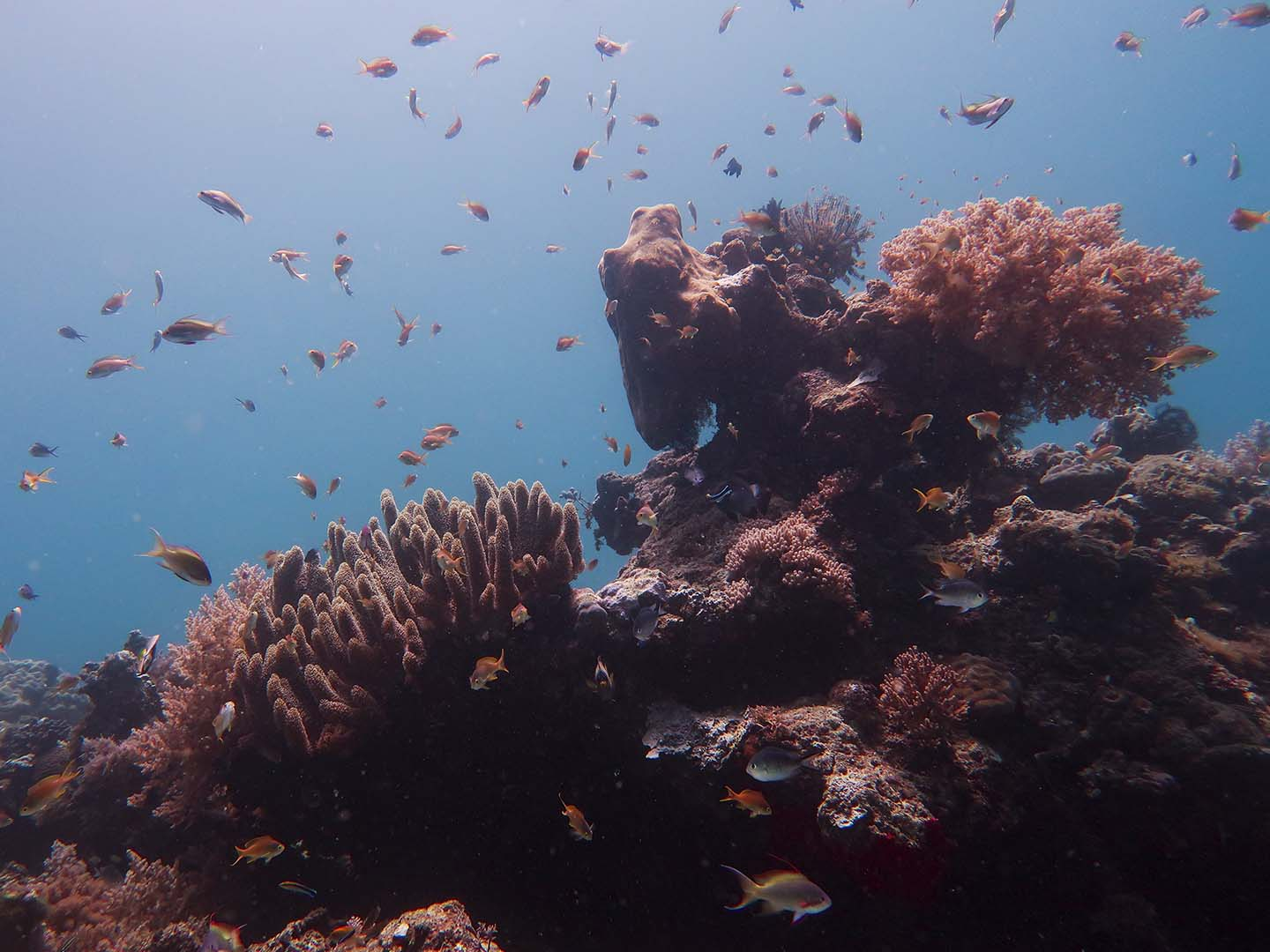 Beautiful reefscape in pigery dive site in Antique