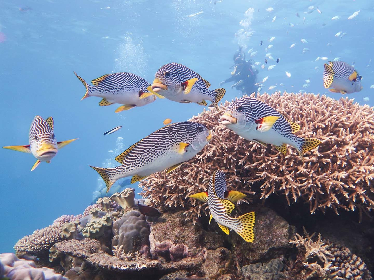Diving in The Great Barrier Reef. Photo shot with a Canon G7X Mark II Underwater.