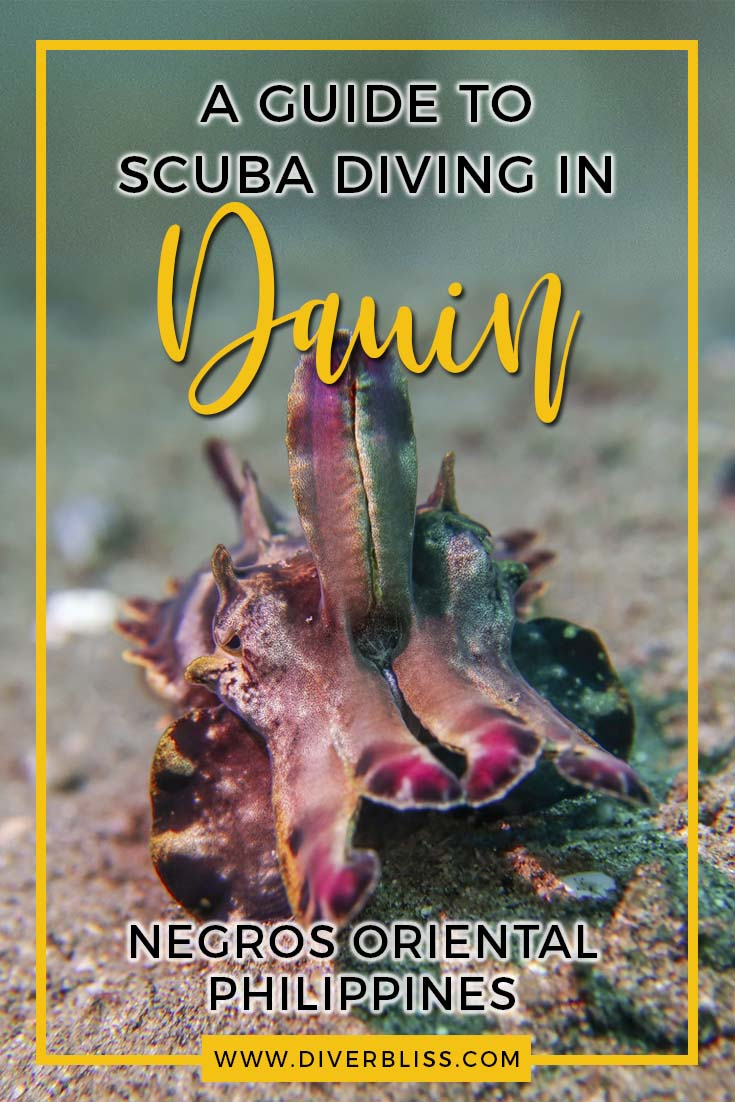 A guide to scuba diving in Dauin, Negros Oriental, Philippines