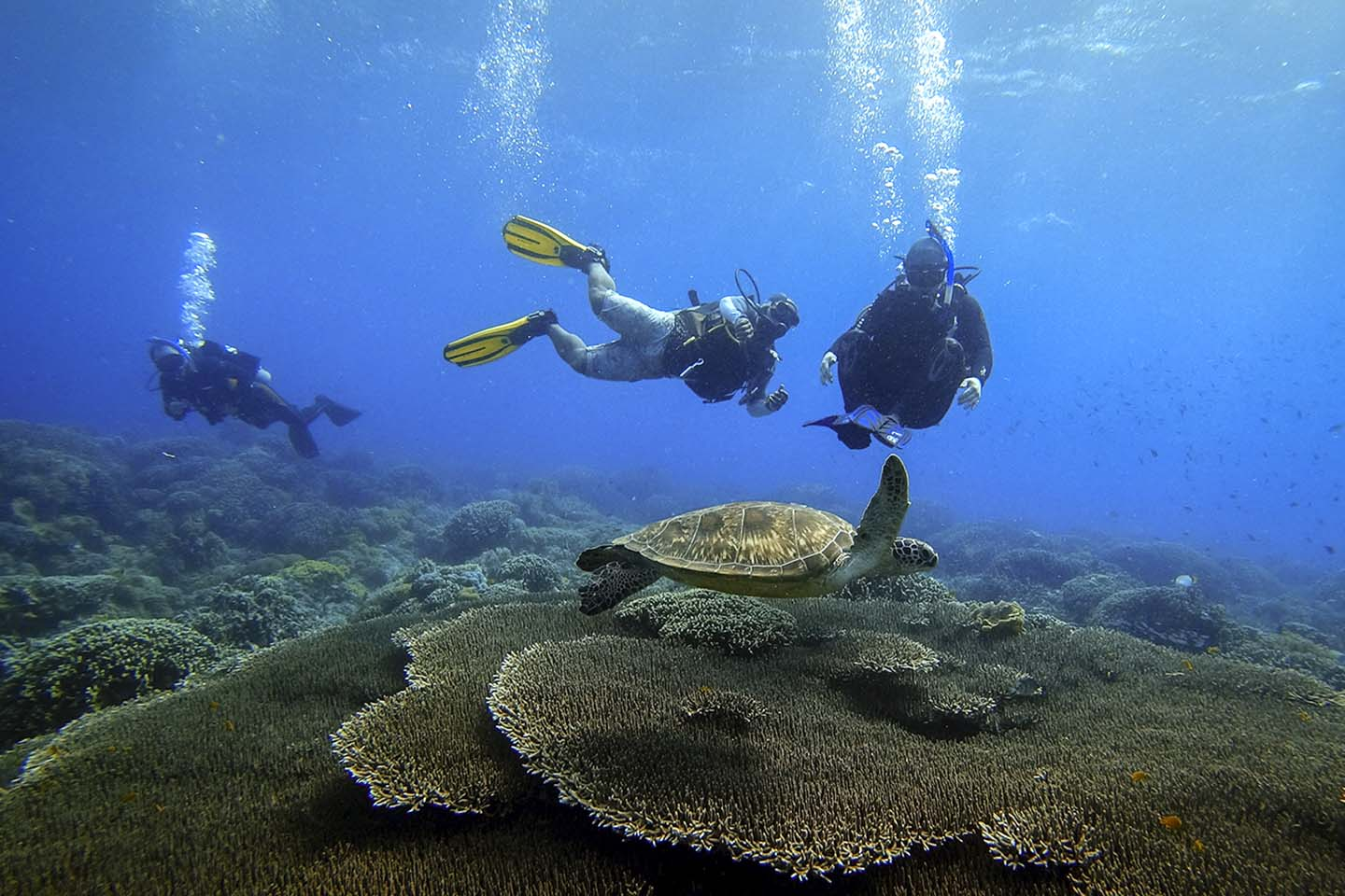 Scuba diving with turtles in Apo Island.