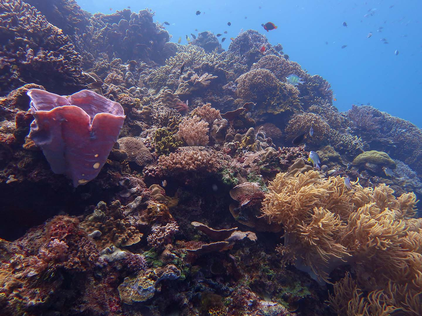 Sawang Dive Site in Siquijor has beautiful underwater terrain filled with sponges and hard and soft corals.