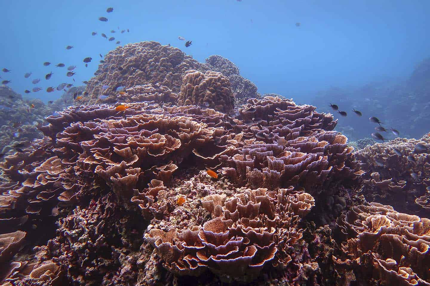 Scuba Diving Siquijor: The Mystical Island in the Philippines