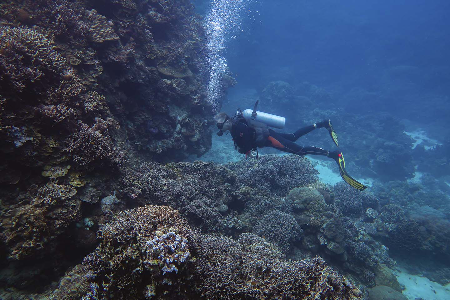 Our dive guide looking for interesting marine life to show us while diving in Maite dive site in Siquijor