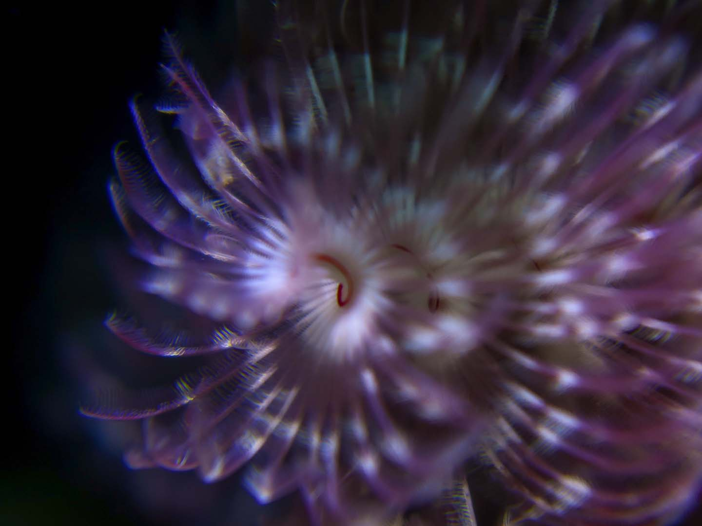 Siquijor Scuba Diving things to see underwater: Featherstar fish