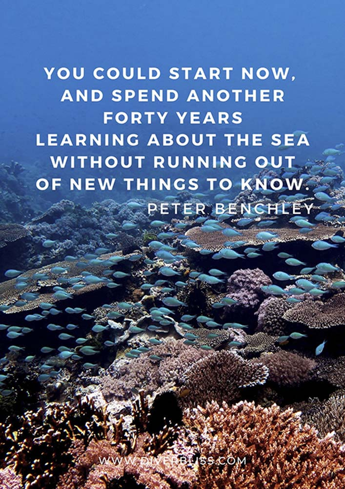 """Scuba Diving Quotes: """"You could start now, and spend another forty years learning about the sea without running out of new things to know."""" – Peter Benchley"""