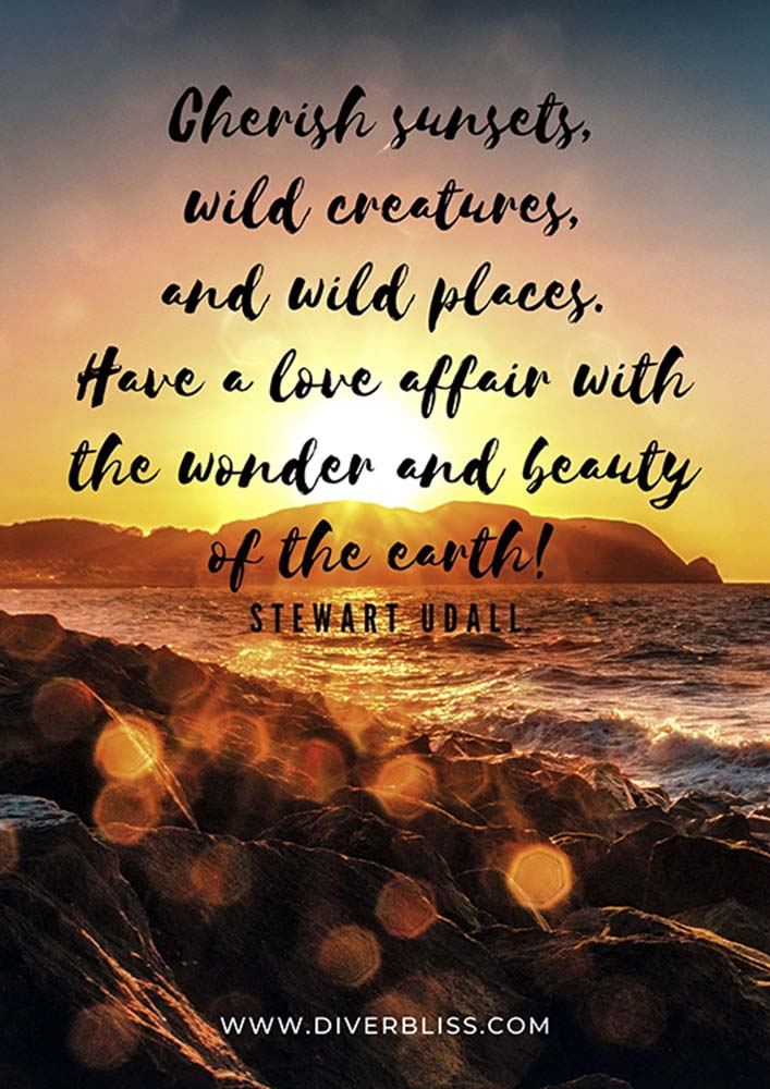 """Sunset Quotes Poster: """"Cherish sunsets, wild creatures, and wild places. Have a love affair with the wonder and beauty of the earth!""""- Stewart Udall"""
