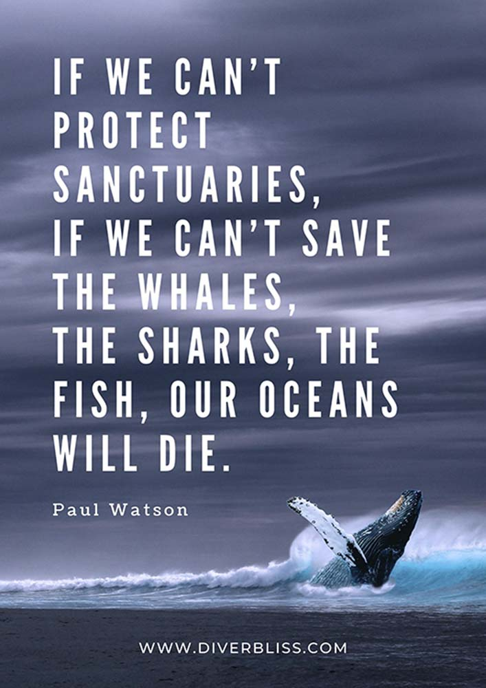 """Ocean Conservation Quotes Poster: """"My position is this. If we can't protect sanctuaries, if we can't save the whales, the sharks, the fish, our oceans will die."""" - Paul Watson"""