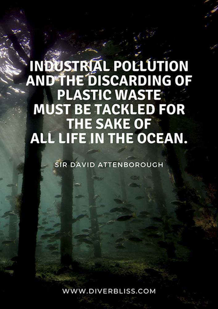 """Plastic Pollution Quotes Poster: """"Industrial pollution and the discarding of plastic waste must be tackled for the sake of all life in the ocean."""" - David Attenborough"""