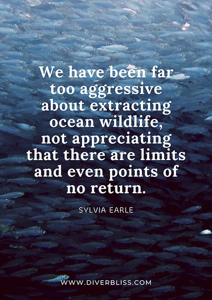 """Ocean Wildlife Protection Poster: """"We have been far too aggressive about extracting ocean wildlife, not appreciating that there are limits and even points of no return."""" - Sylvia Earle"""