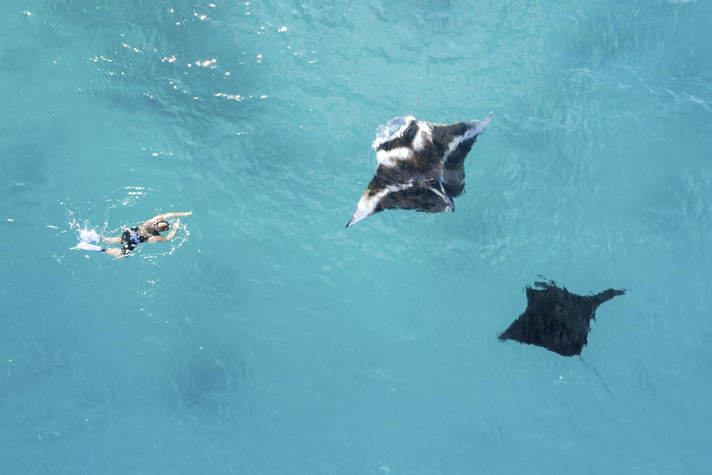Drone shot swimming with manta rays in fiji