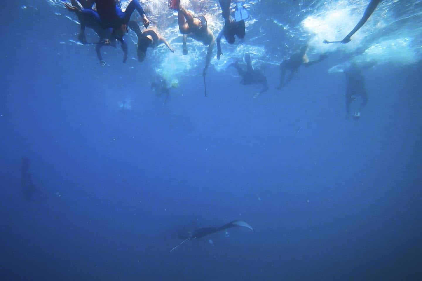 The hoard of snorkelers chasing after the manta rays in Fiji