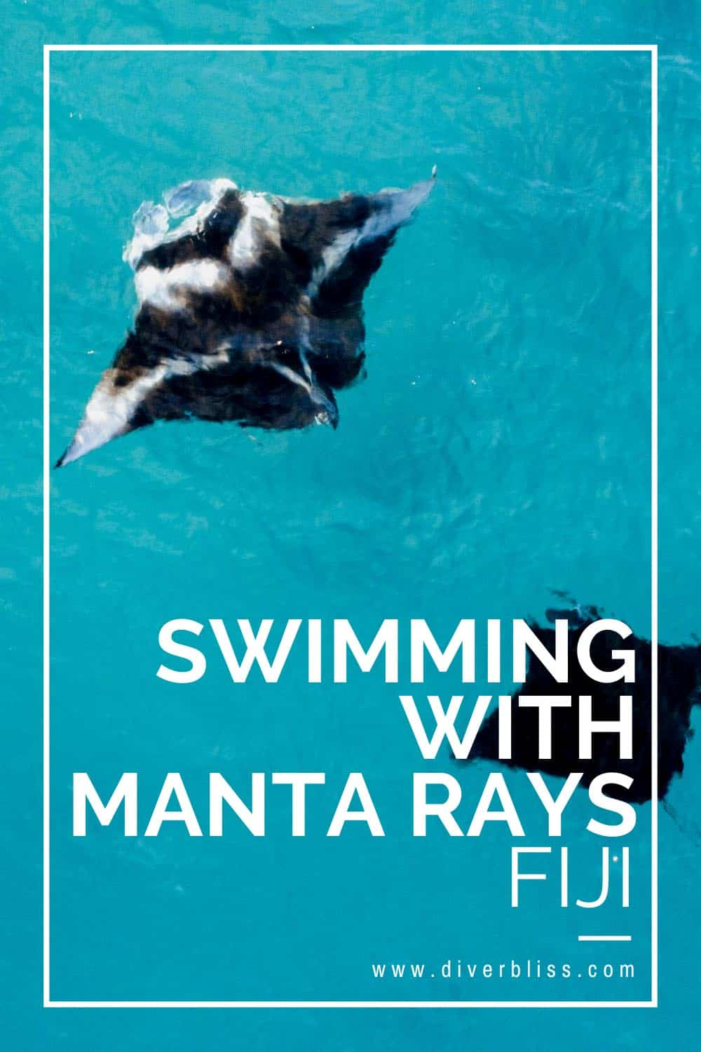 Guide to Swimming with Manta Rays in Fiji