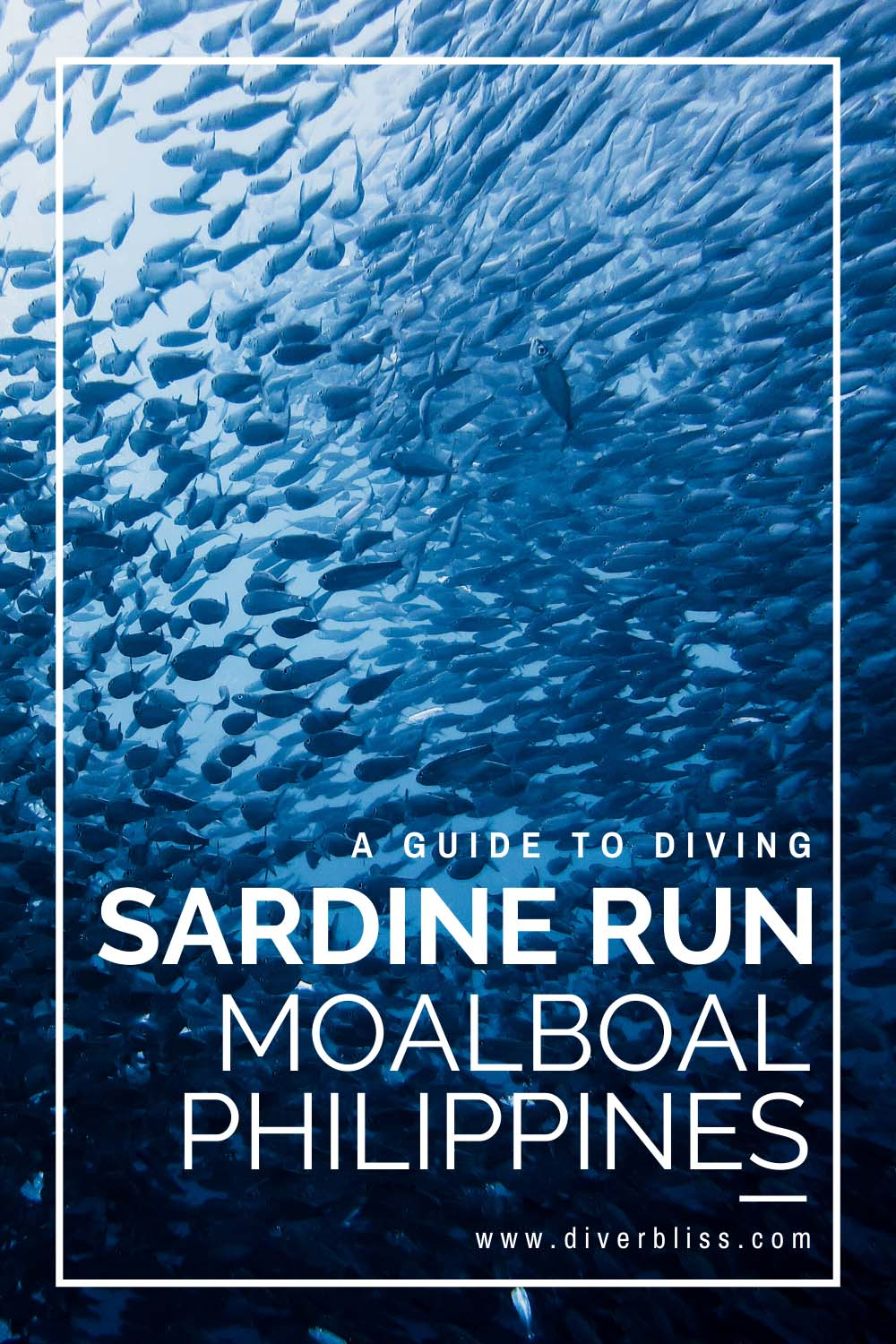 A guide to diving the sardine run in Moalboal, Cebu, Philippines.