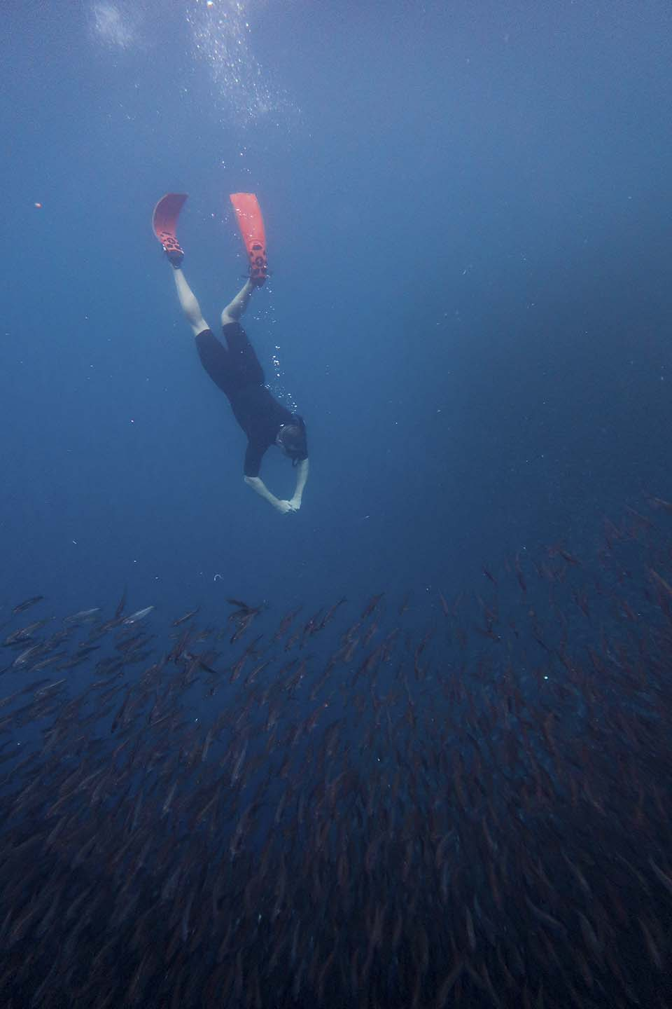Freediving with the Sardines in Moalboal
