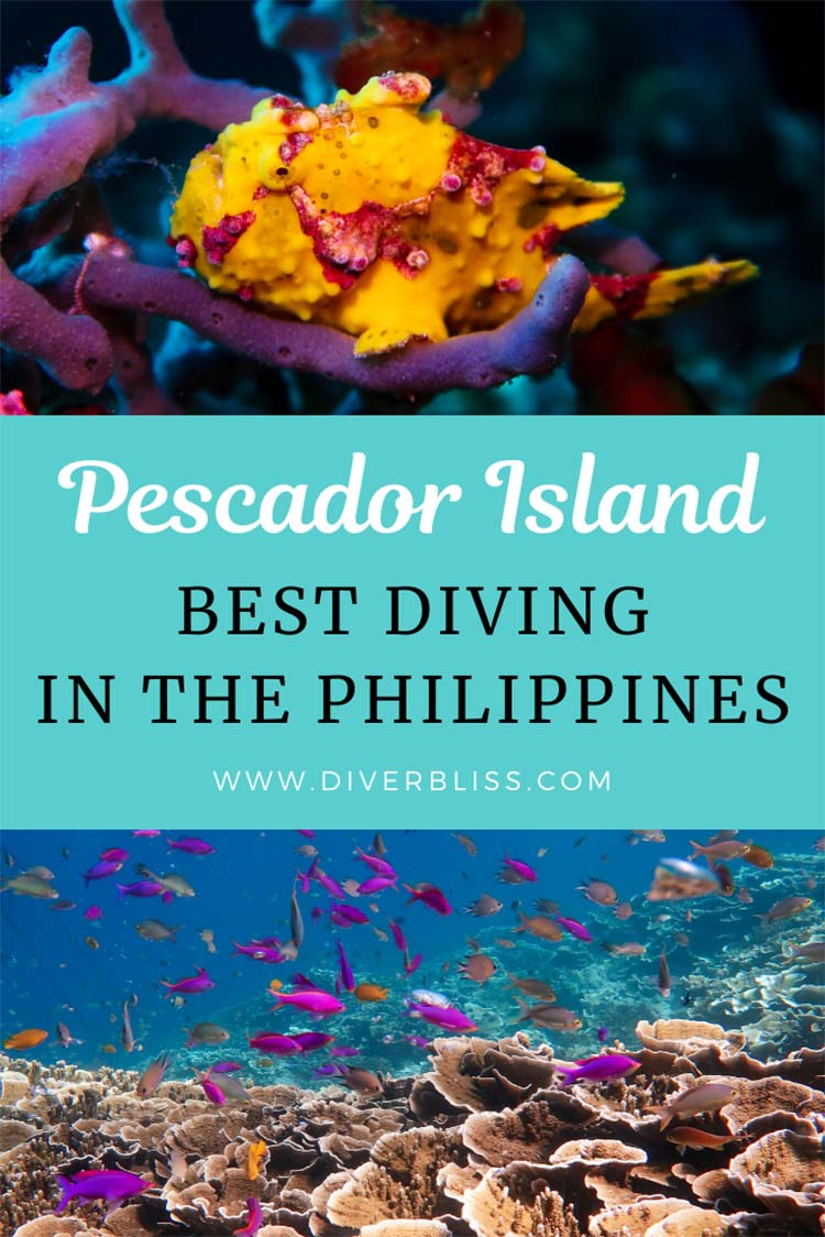 Best Diving in the Philippines: Pescador Island Moalboal