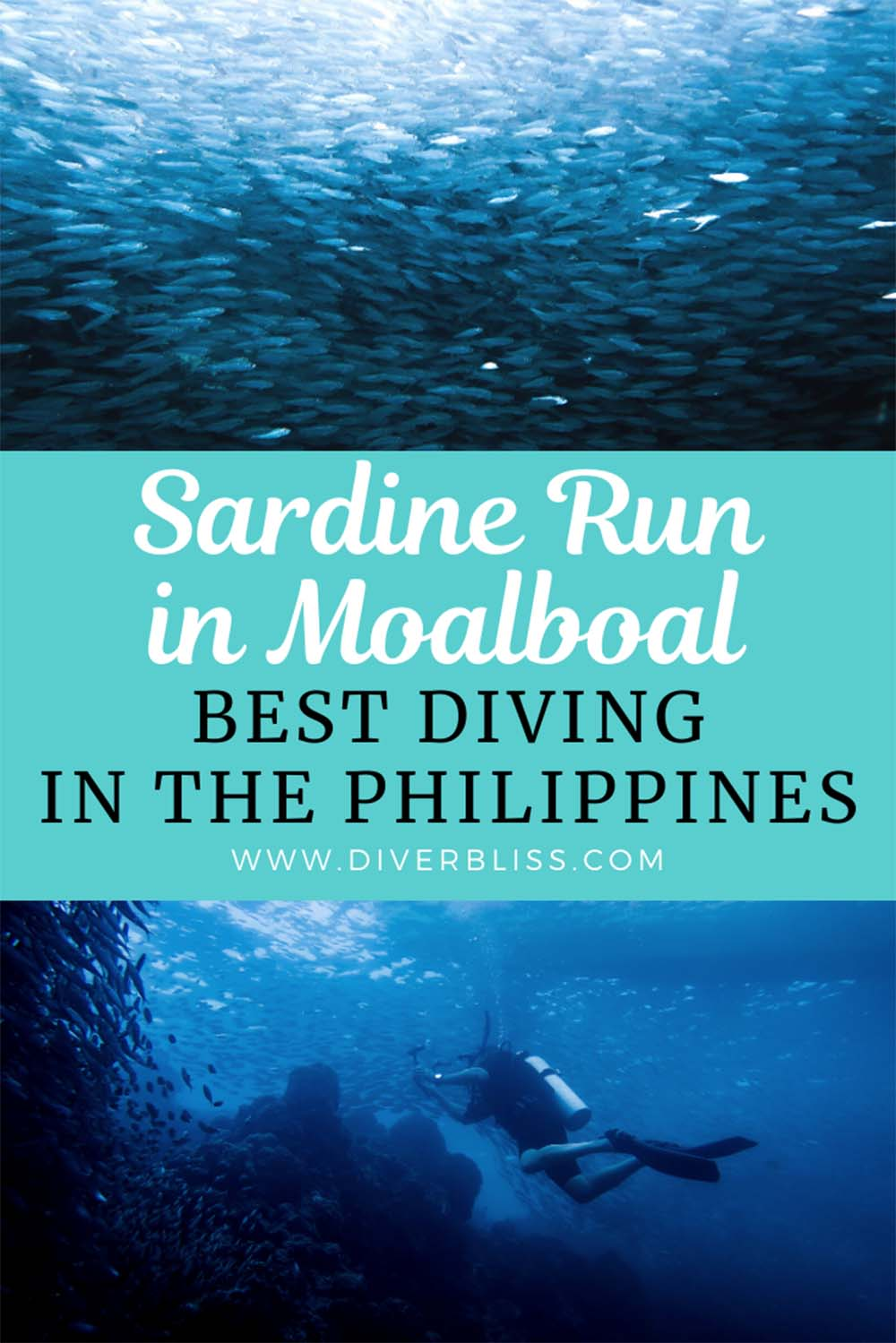 Experience the best diving in the Philippines with the Sardine Run in Moalboal