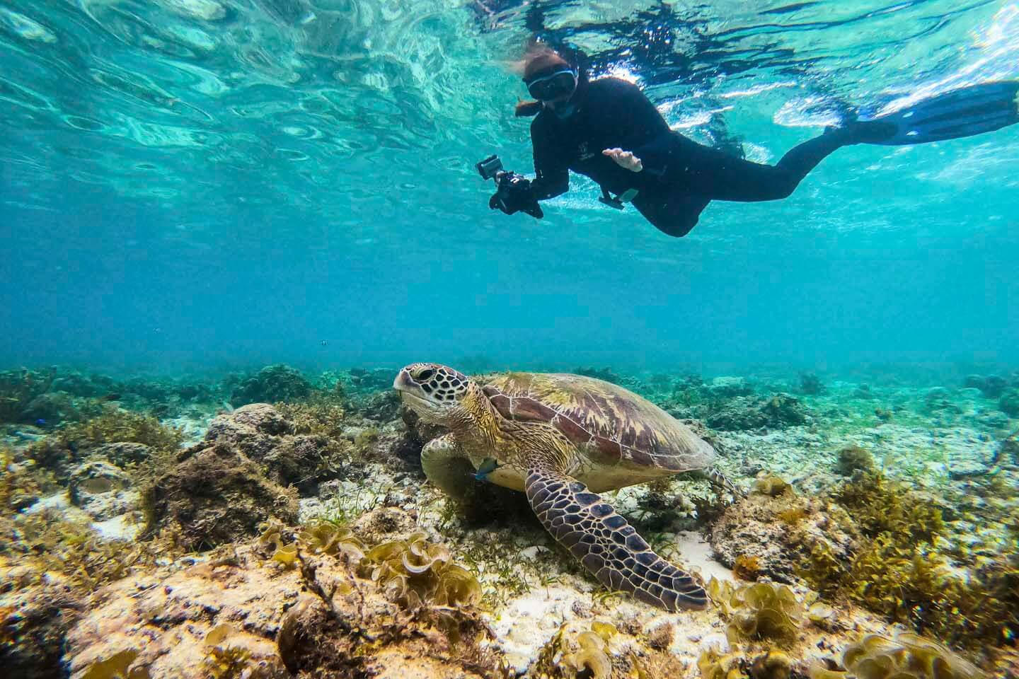Snorkeling with Turtles in Moalboal
