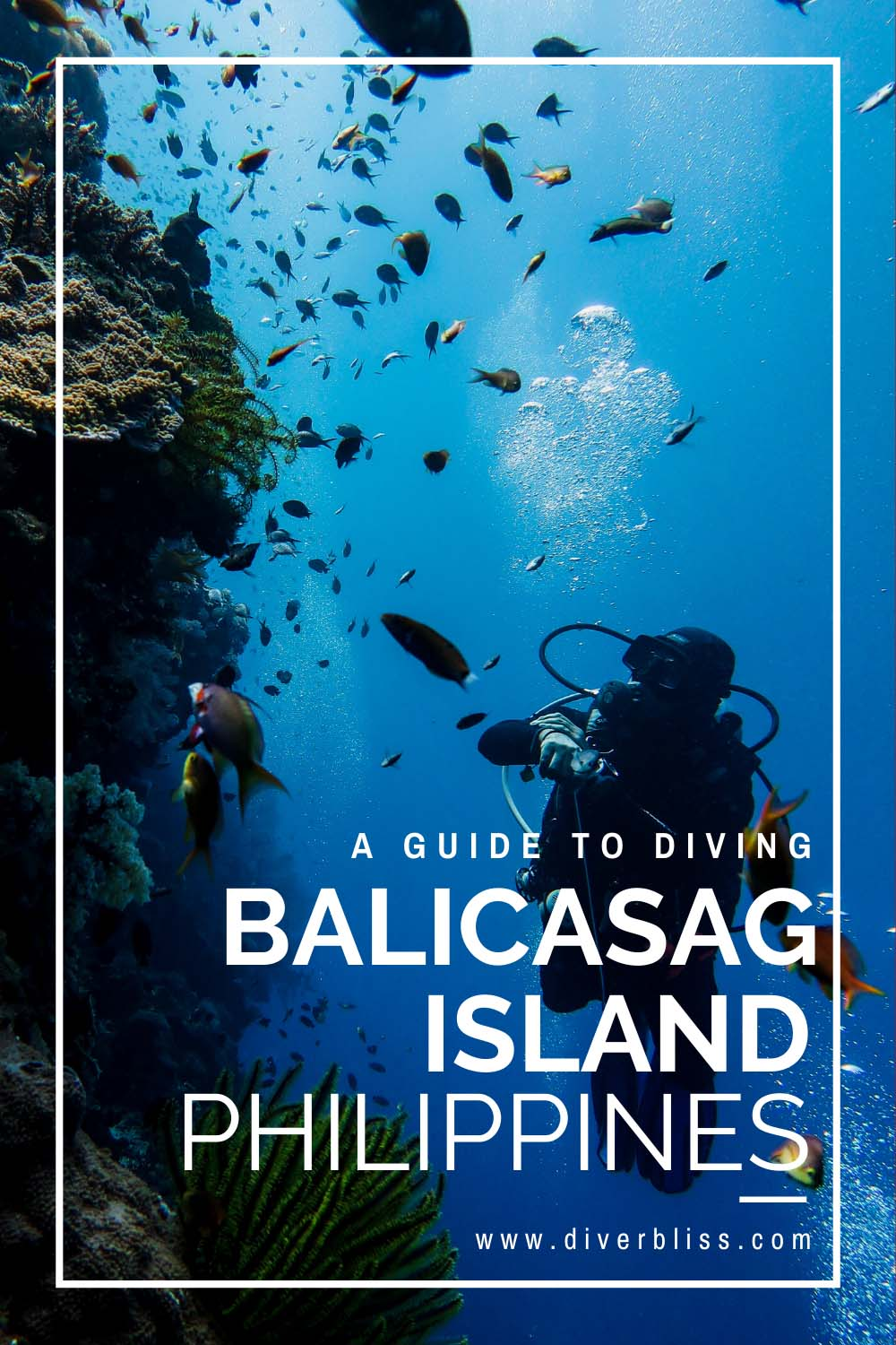 A Guide to diving in Balicasag Island, Bohol Philippines