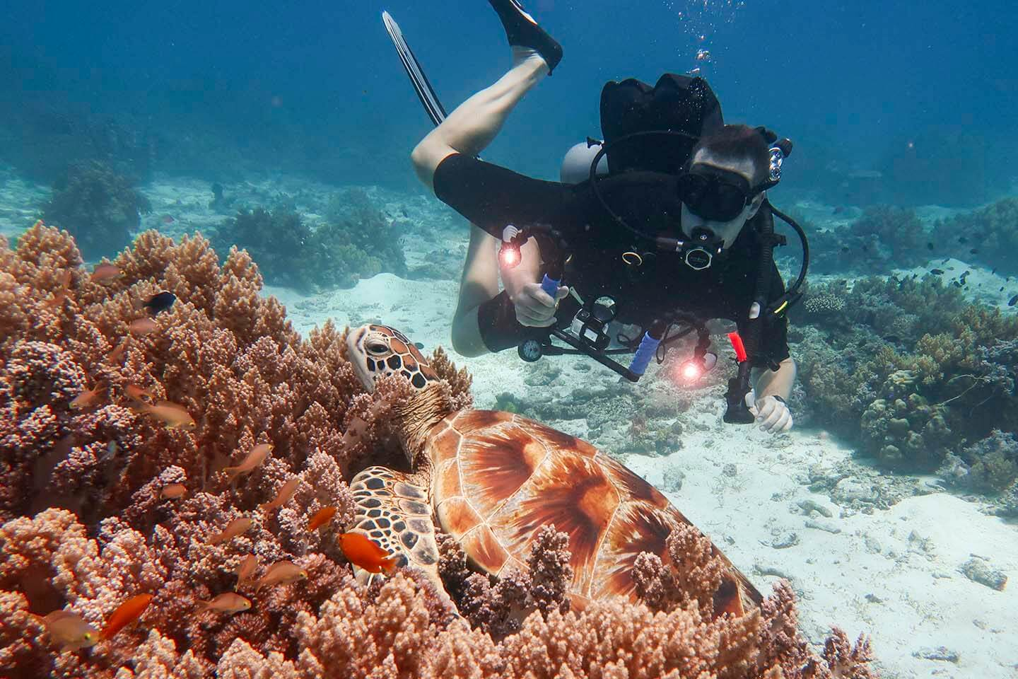 a green sea turtle resting on top of the soft corals in Balicasag Island