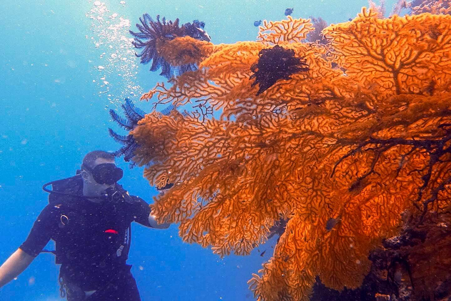 Large sea fans spotted during wall dives in Panglao