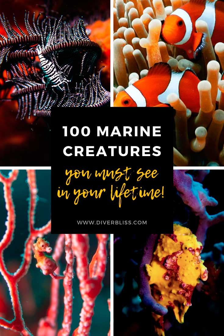 100 marine creatures you must see in your lifetime.