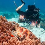 Underwater photography tips for beginnners