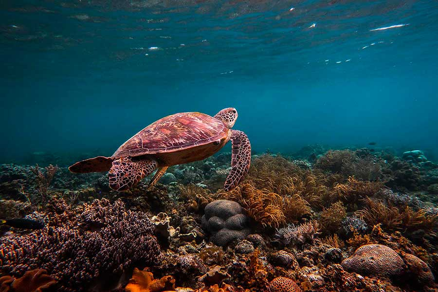 Swimming with sea turtles in the Philippines