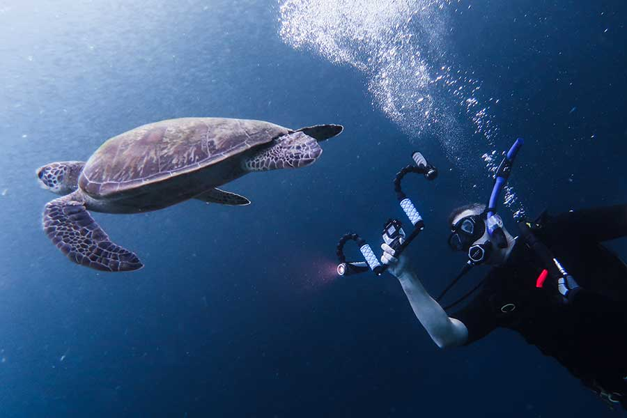 Underwater photography mistakes: Rushing Towards Your Subject