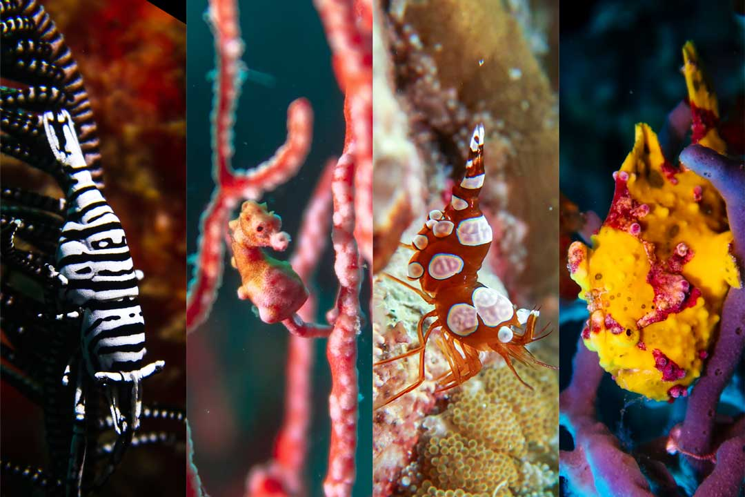 100 of the most popular marine life in the Philippines
