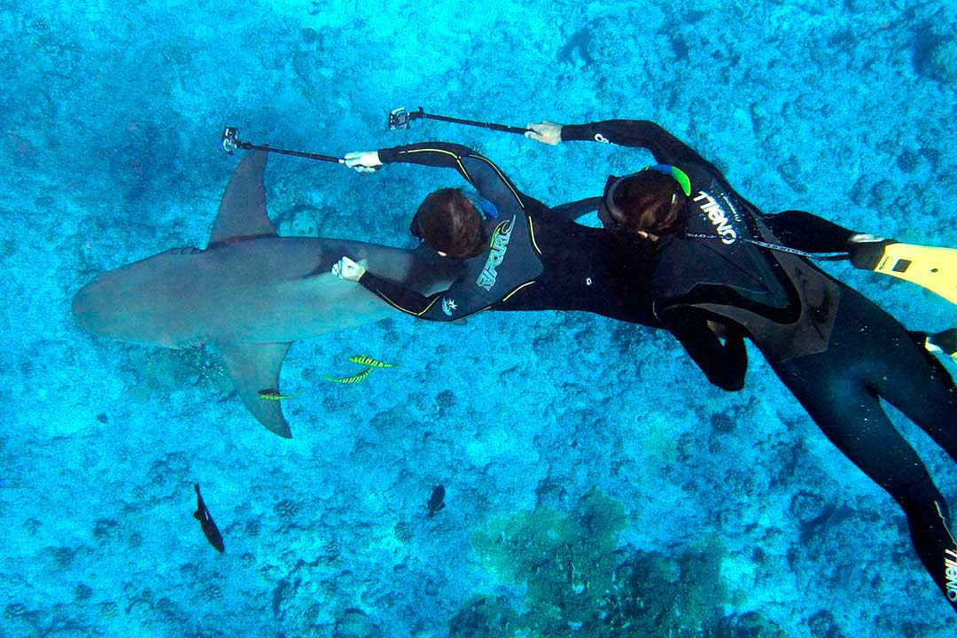 Divers love touching marine life for the sake of a photo. A huge no-no in diving.