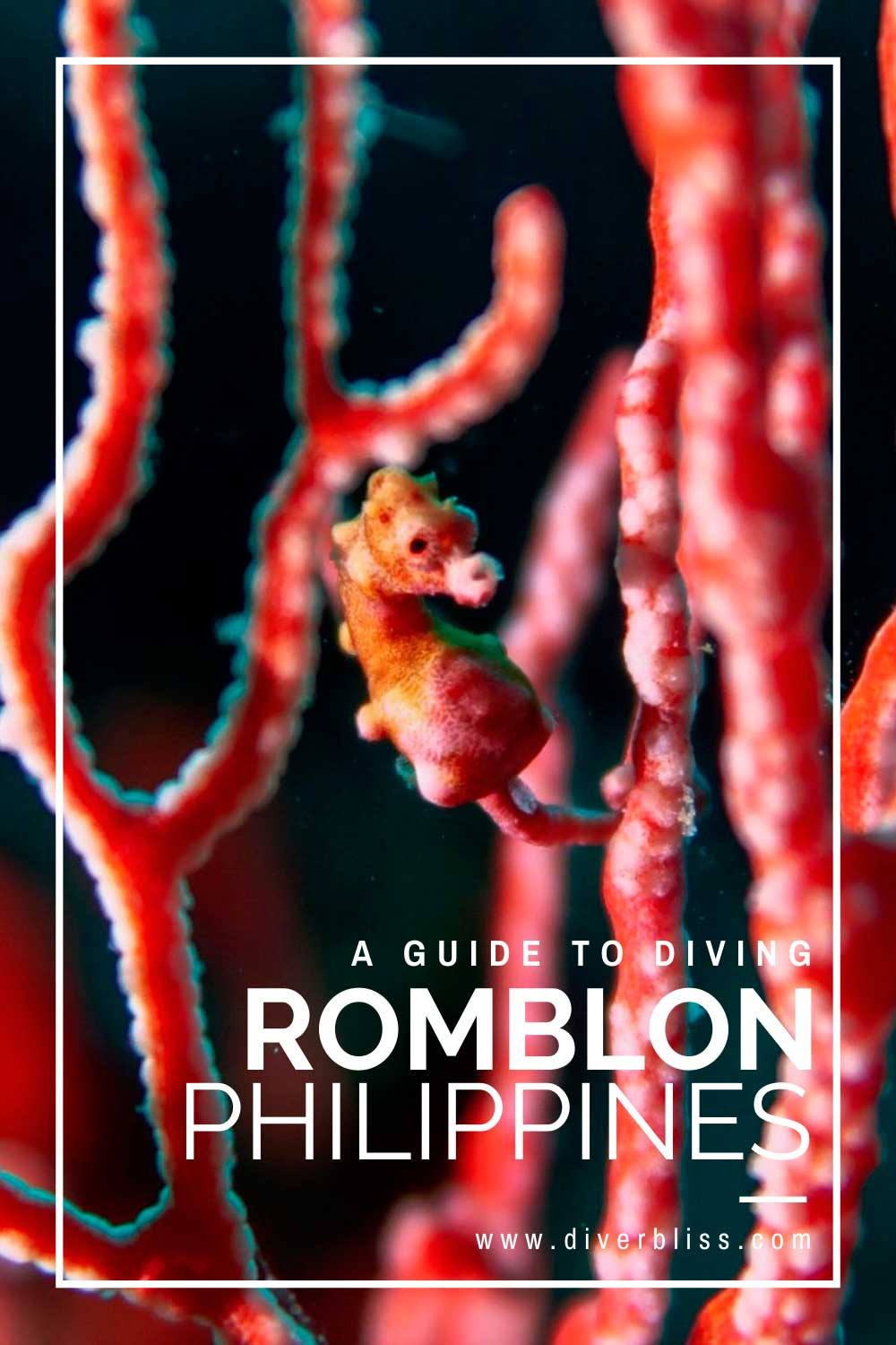 A Guide to Diving Romblon Philippines