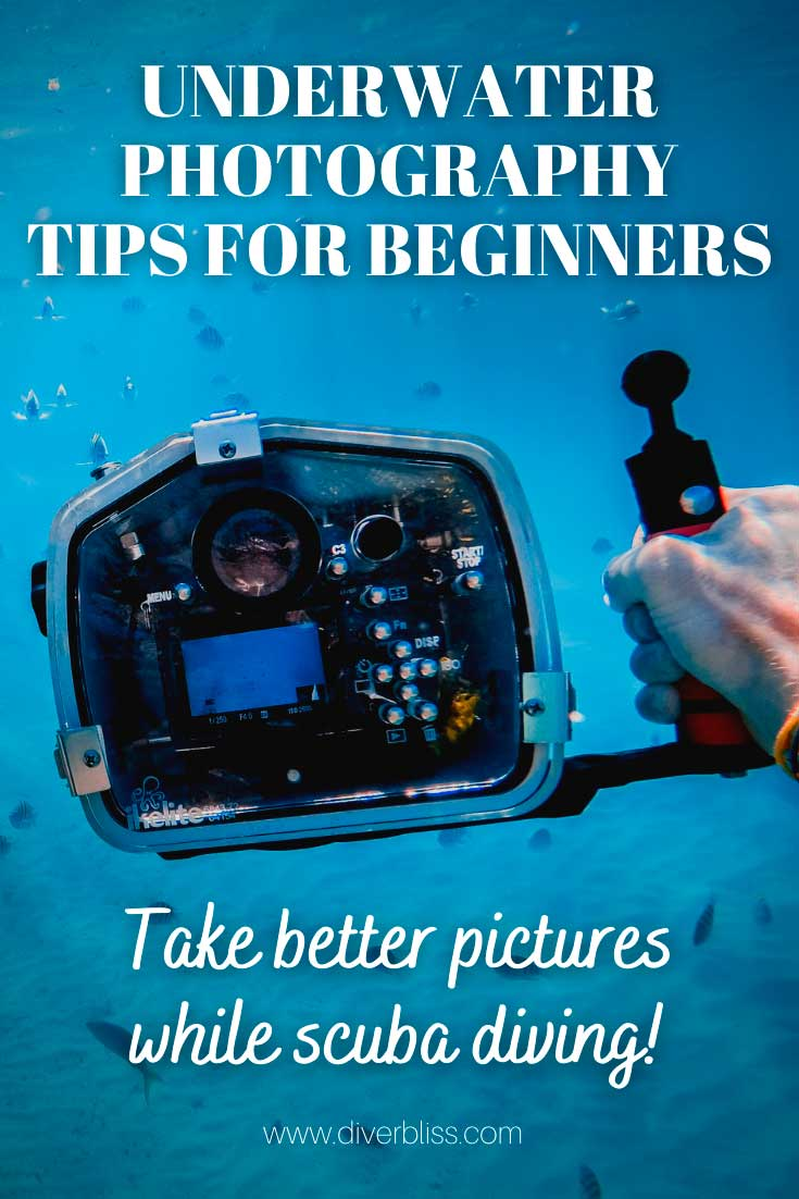Underwater Photography Tips for Beginners: Take beter pictures while scuba diving!