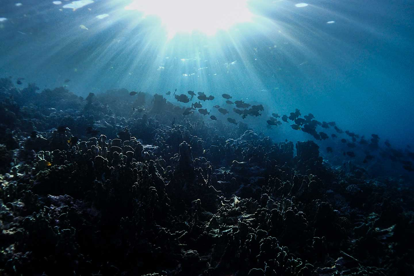 How to take underwater photos using natural light