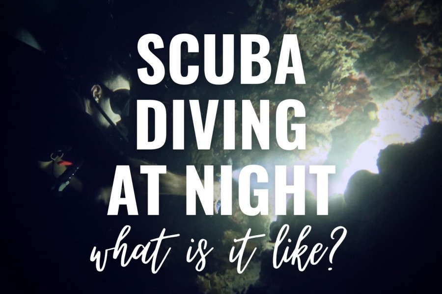 Scuba diving at night: what is it like?
