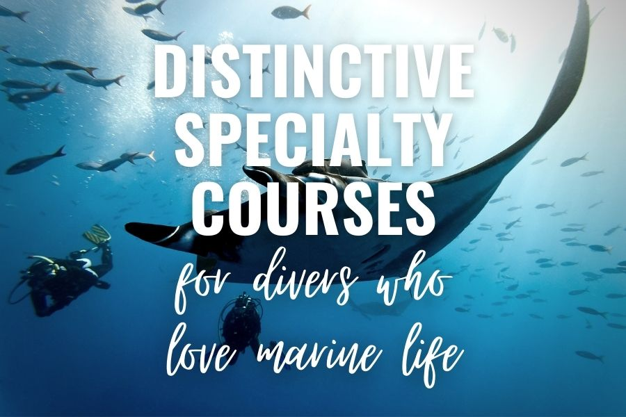 15 PADI Distinctive Specialty Courses For Divers Who Love Marine Life