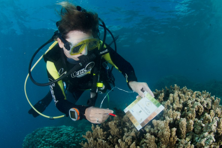 Be citizen scientist when you take the PADI CoralWatch Coral Health Chart Distinctive Specialty