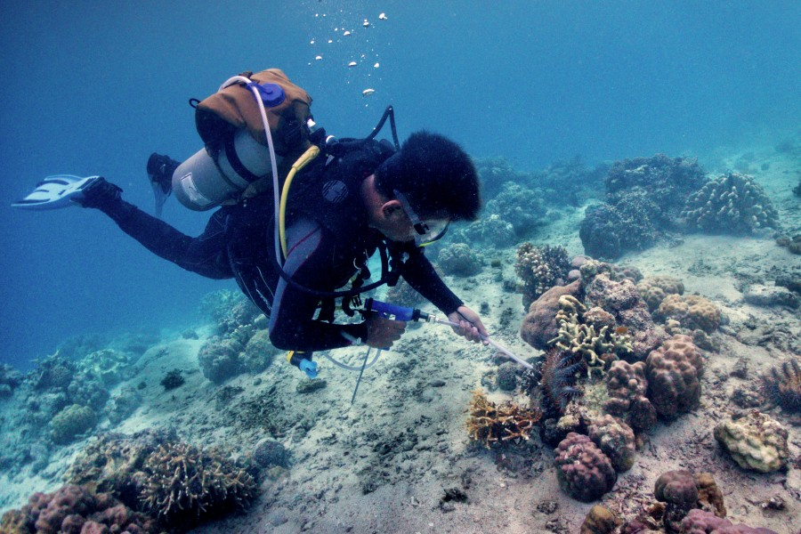 Learn how to address COTs infestation when you take the PADI Crown of Thorns Management Divers Course