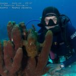PADI Frogfish Specialist Course Daniel Geary