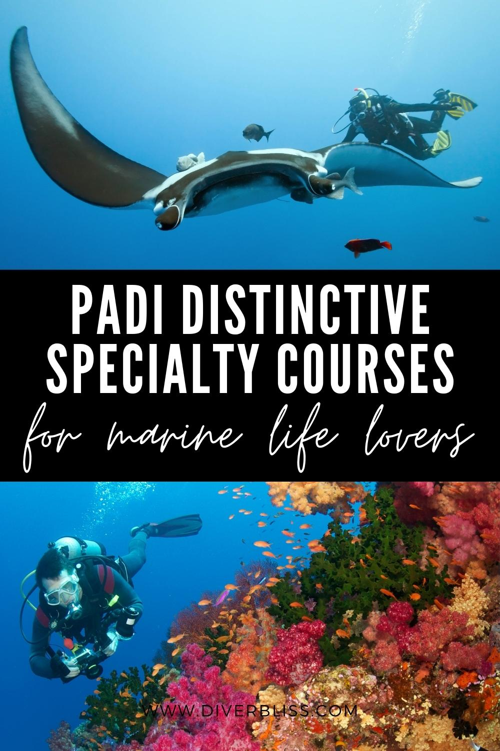 PADI distinctive specialty courses for marine life lovers