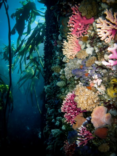 """""""Noble Corals"""" in Cape Town by Lisa Beasley"""