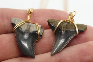 Rare Shark tooth Necklace by SHRKco