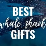 best whale shark gifts