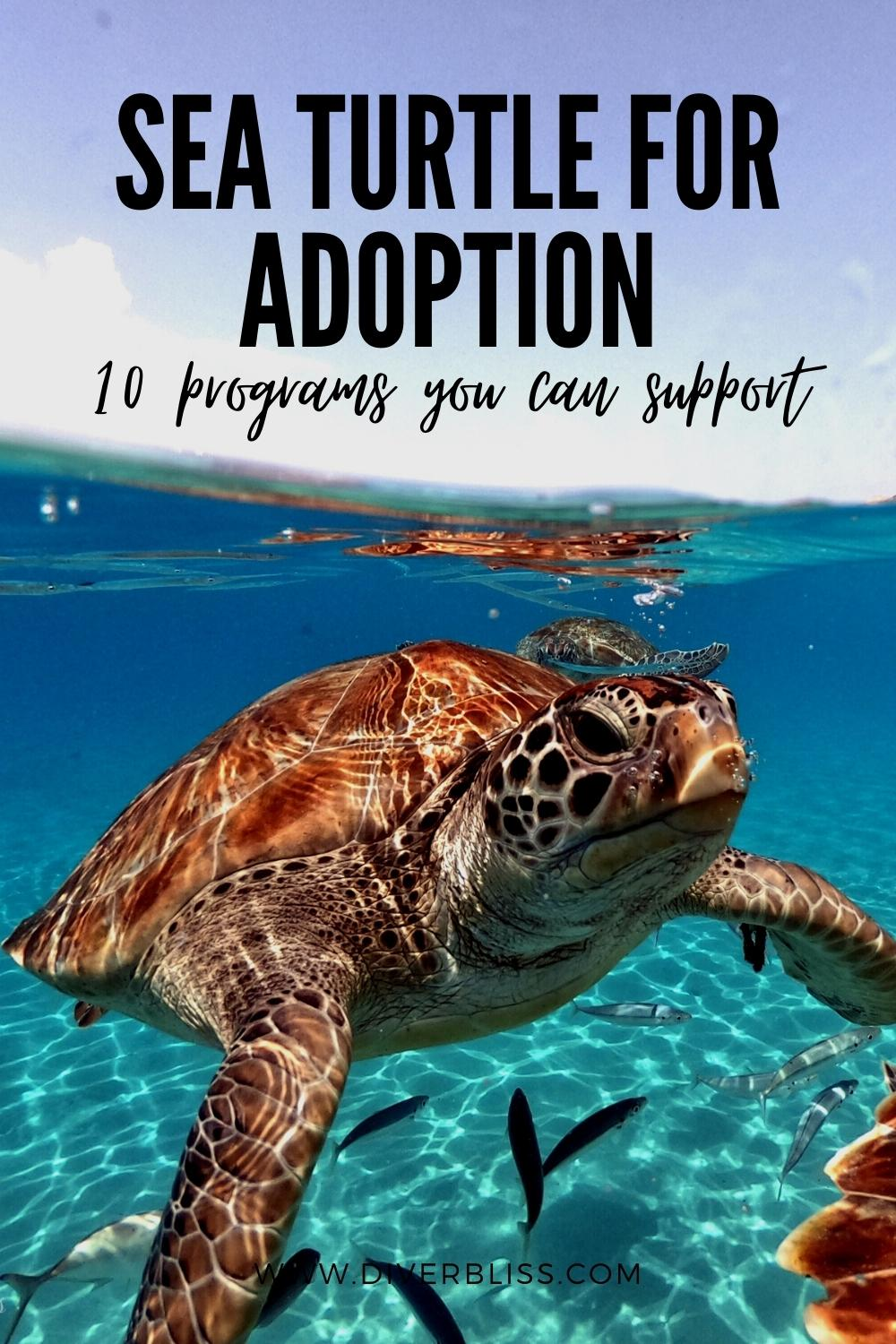 sea turtle adoption 10 programs you can support