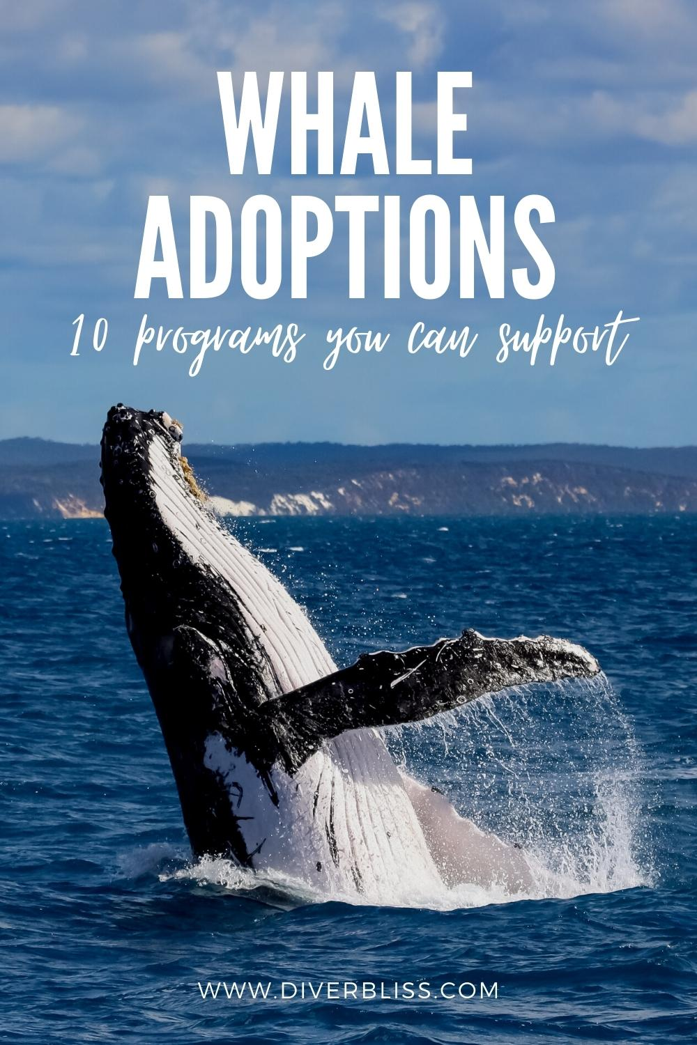 whale adoption, 10 programs you can support