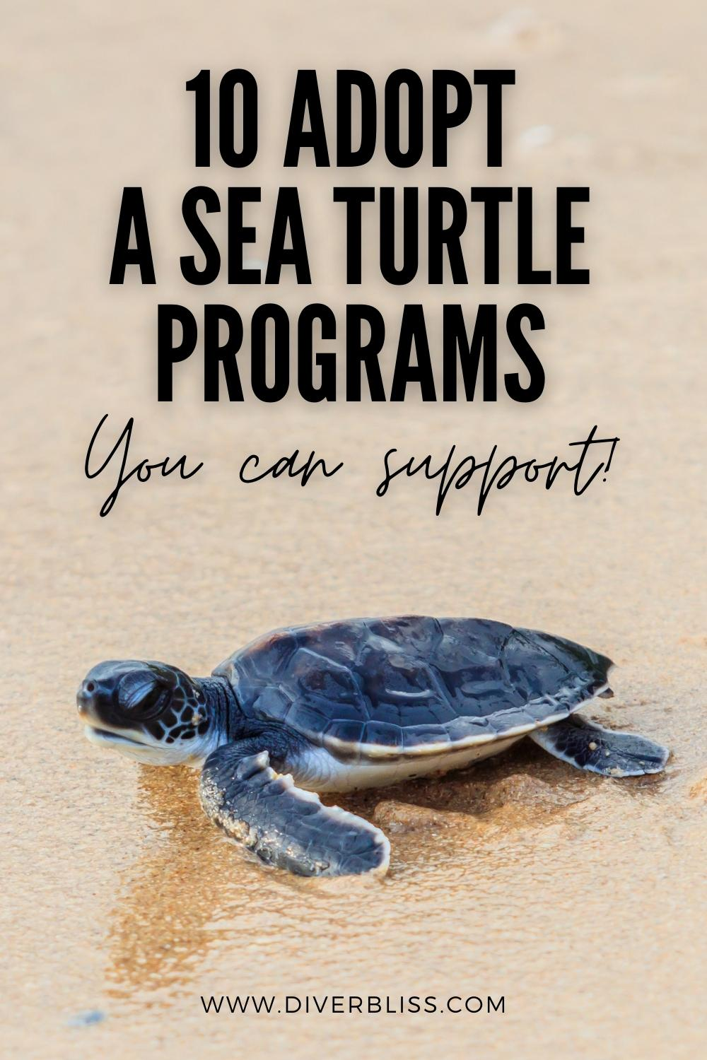 10 adopt a sea turtle programs you can support