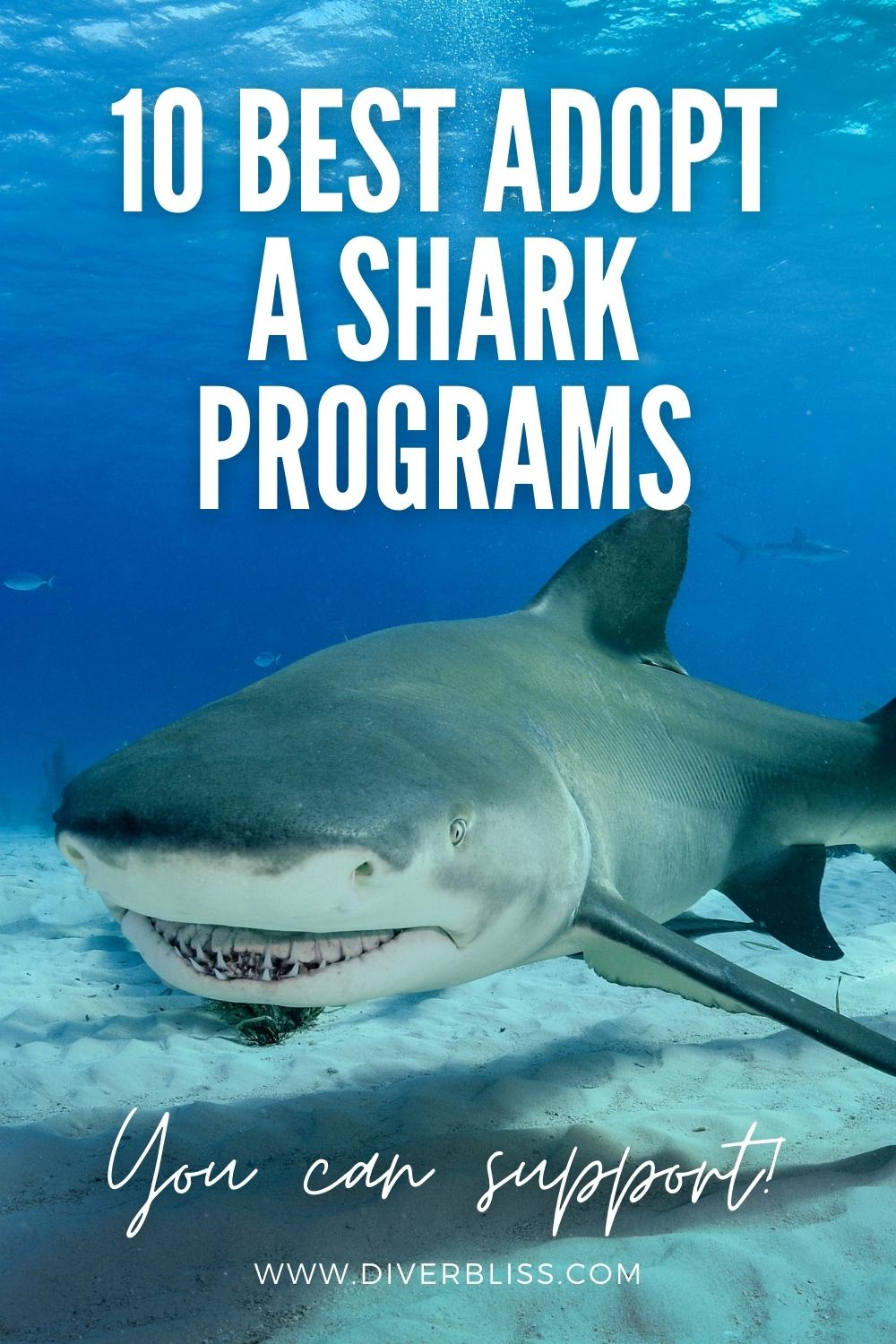 10 best adopt a shark programs you can support