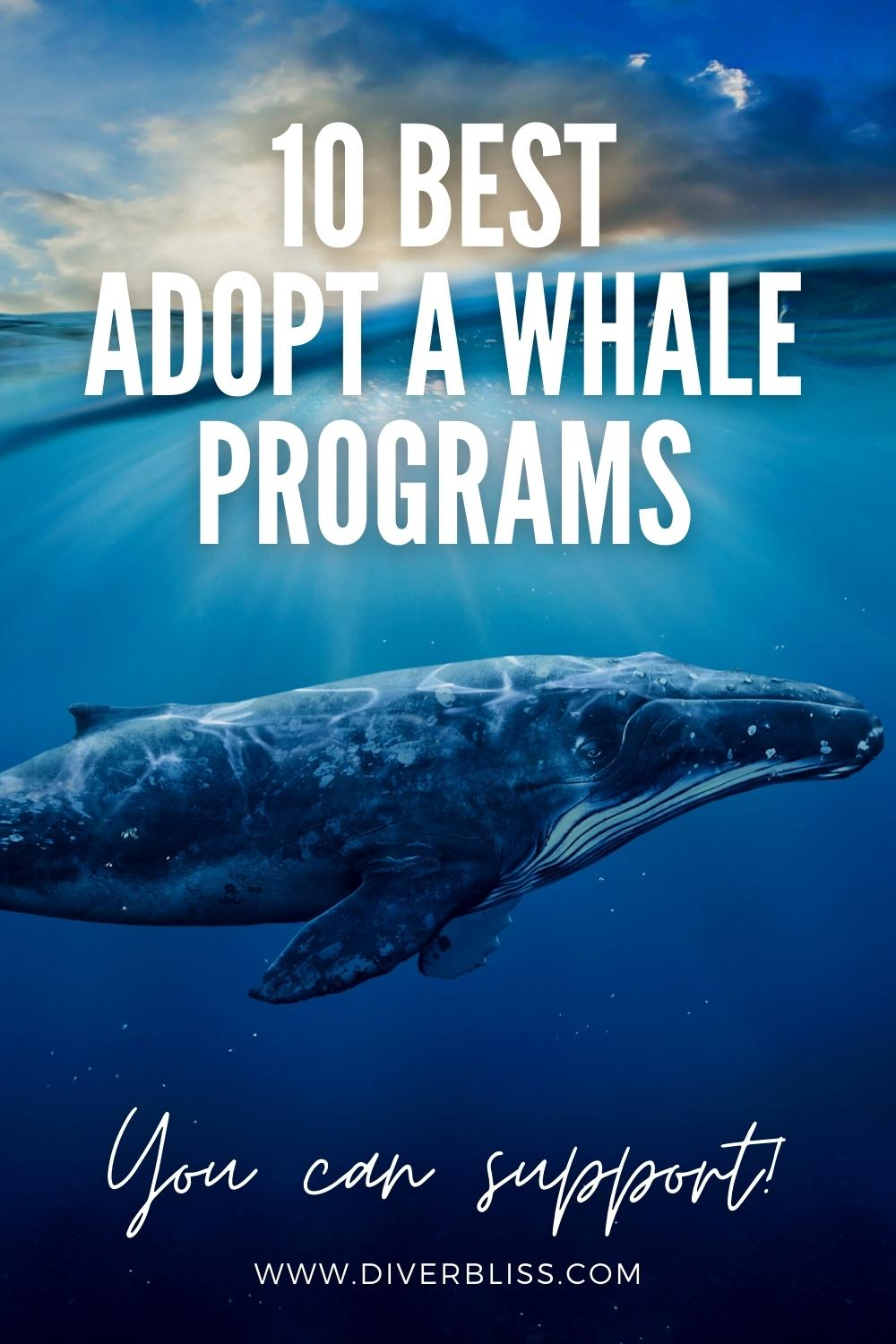 10 best adopt a whale programs