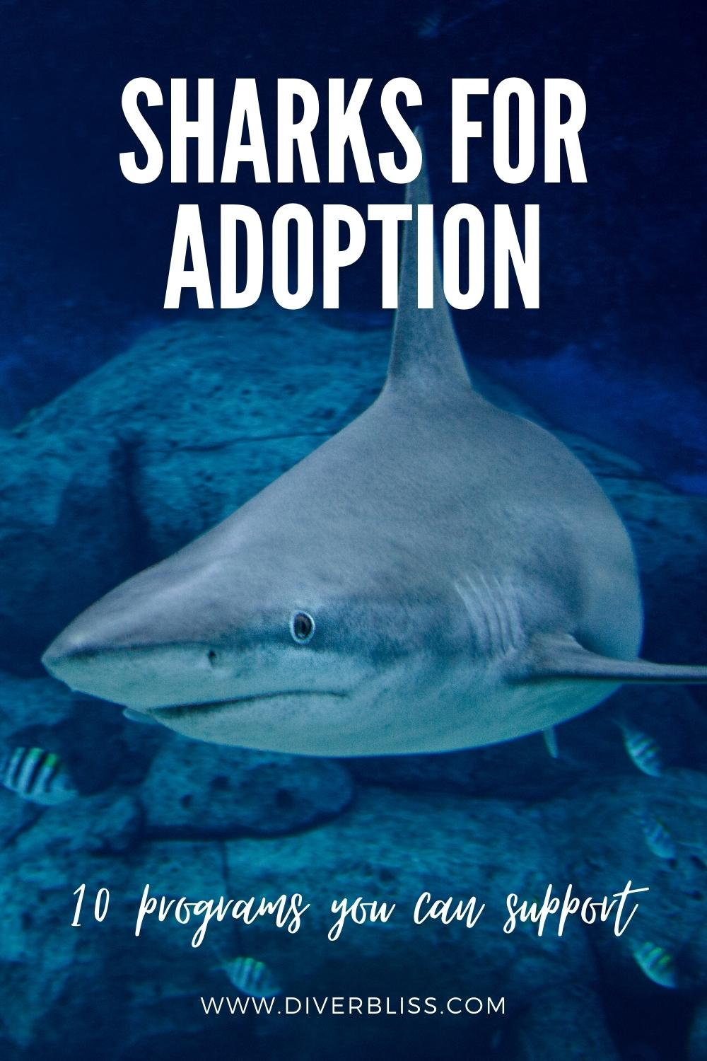 sharks for adoption: 10 programs you can support